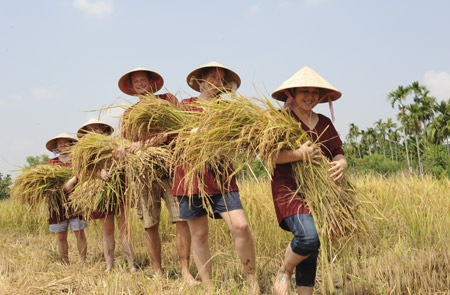 Rice Show In Hoi An - Half day